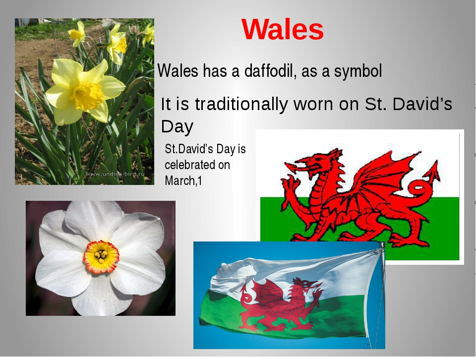 Wales Wales has a daffodil, as a symbol It is traditionally worn on St. Davi...