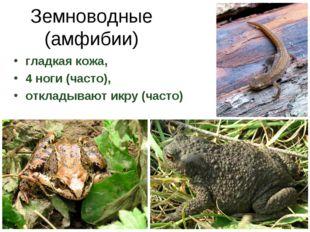 Земноводные (амфибии) гладкая кожа, 4 ноги (часто), откладывают икру (часто)
