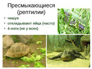 Пресмыкающиеся (рептилии) чешуя откладывают яйца (часто) 4 ноги (не у всех)