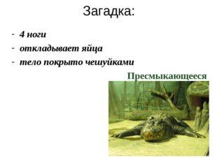 Загадка: 4 ноги откладывает яйца тело покрыто чешуйками  Пресмыкающееся