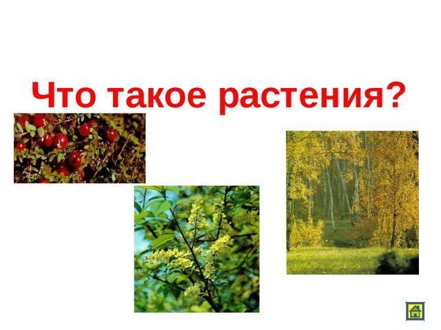 Что такое растения?