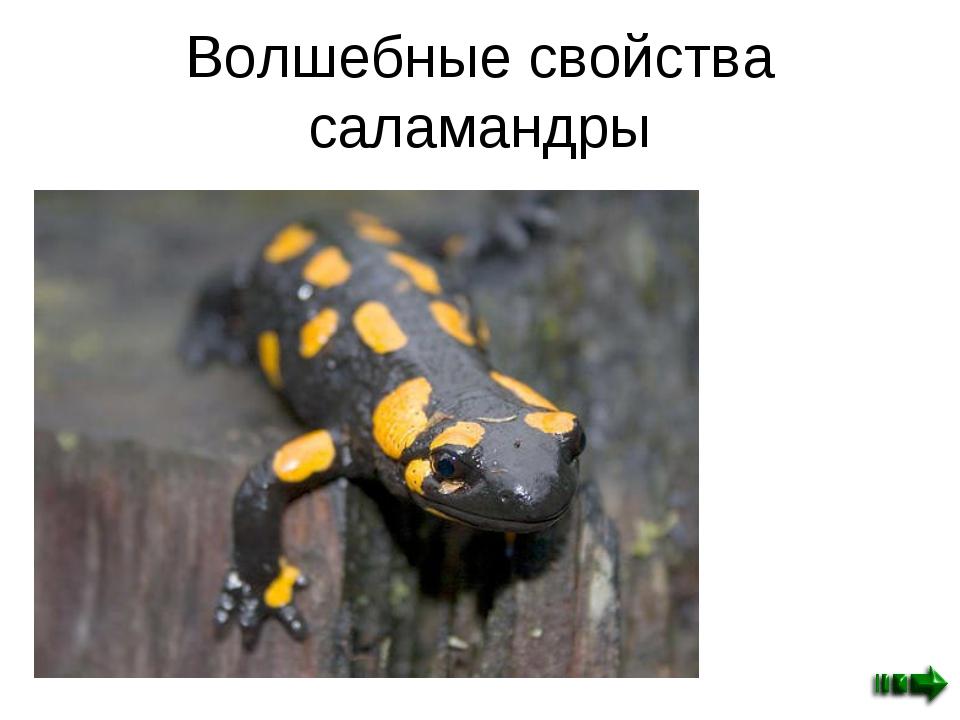 Волшебные свойства саламандры