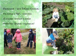 Растения – нам добрые братья,- Былинка и дуб – исполин. Планеты зелёное плать
