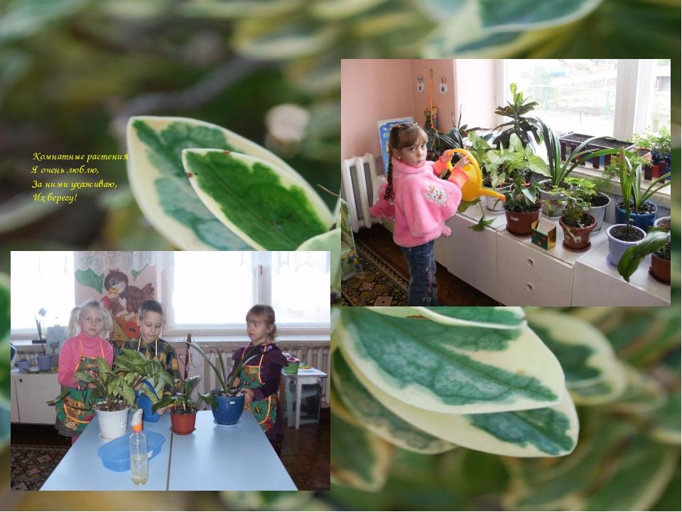 Комнатные растения Я очень люблю, За ними ухаживаю, Их берегу!