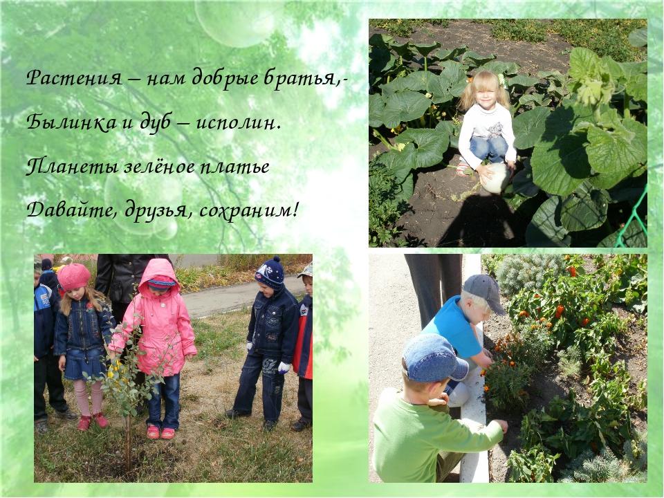 Растения – нам добрые братья,- Былинка и дуб – исполин. Планеты зелёное плать...
