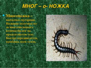 МНОГ – о- НОЖКА Многоножка – насекомое-мусорщик. Название получила из-за мног