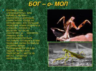 БОГ – о- МОЛ Богомол, или «прорицатель», или «убийца мулов» - насекомое с дли