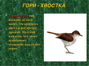 ГОРИ - ХВОСТКА Горихвостка так названа за свой хвост. Он красного цвета и всё