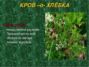 КРОВ –о- ХЛЁБКА Кровохлёбка –лекарственное растение. Произрастает по всей обл