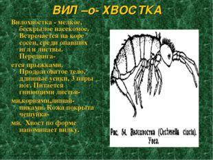 ВИЛ –о- ХВОСТКА Вилохвостка - мелкое, бескрылое насекомое. Встречается на кор