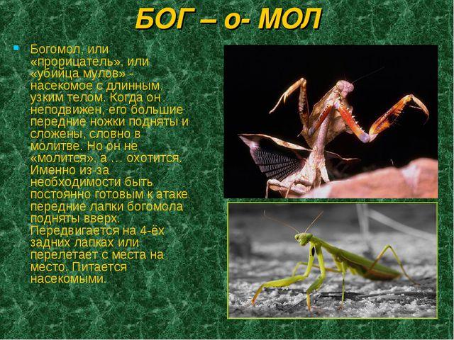 БОГ – о- МОЛ Богомол, или «прорицатель», или «убийца мулов» - насекомое с дли...