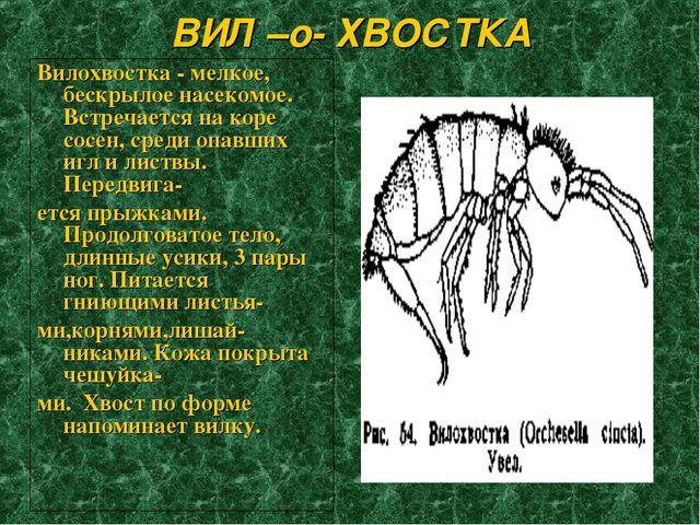 ВИЛ –о- ХВОСТКА Вилохвостка - мелкое, бескрылое насекомое. Встречается на кор...