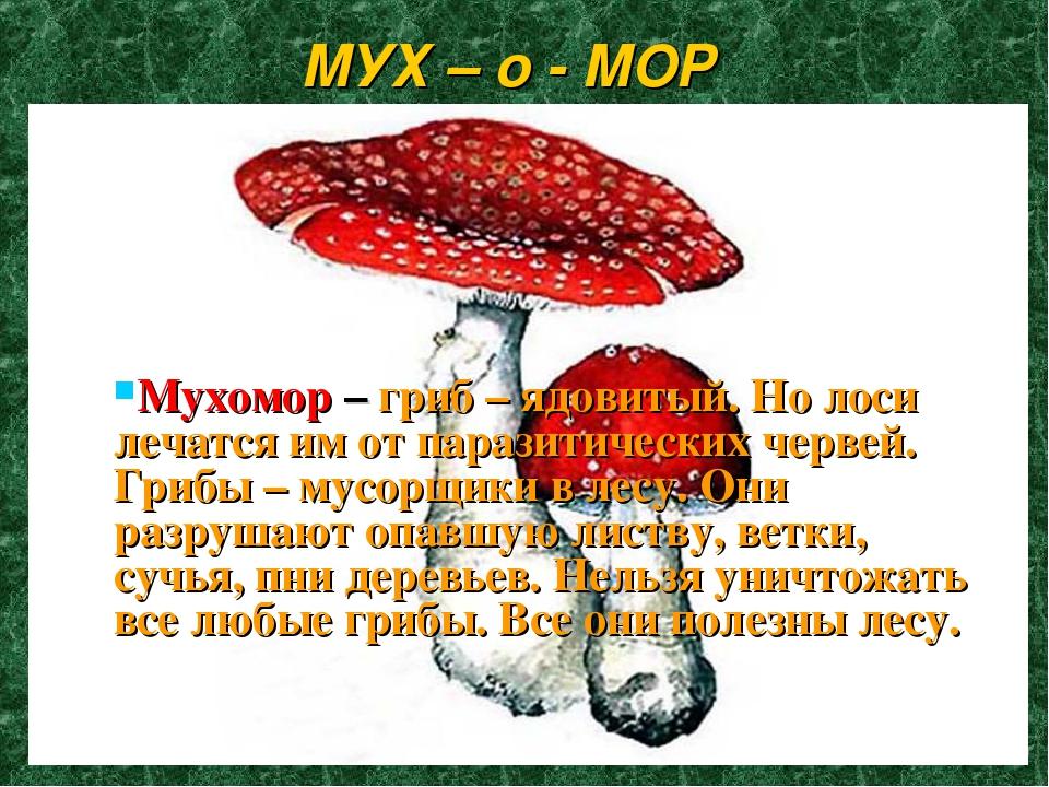 МУХ – о - МОР Мухомор – гриб – ядовитый. Но лоси лечатся им от паразитических...