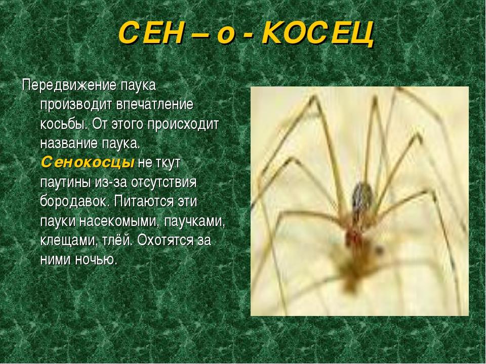 СЕН – о - КОСЕЦ Передвижение паука производит впечатление косьбы. От этого пр...