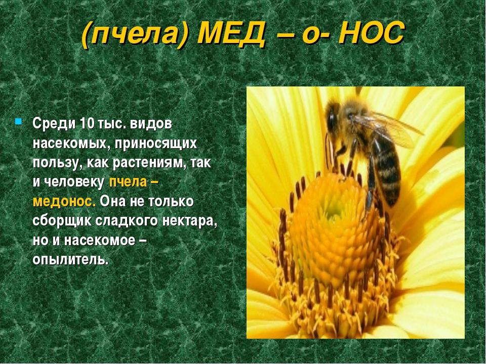 (пчела) МЕД – о- НОС Среди 10 тыс. видов насекомых, приносящих пользу, как ра...