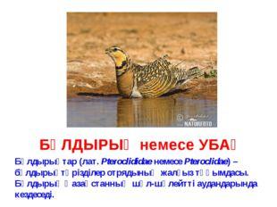 БҰЛДЫРЫҚ немесе УБАҚ Бұлдырықтар (лат. Pteroclididae немесе Pteroclidae) – бұ