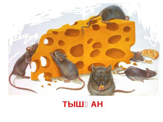ТЫШҚАН