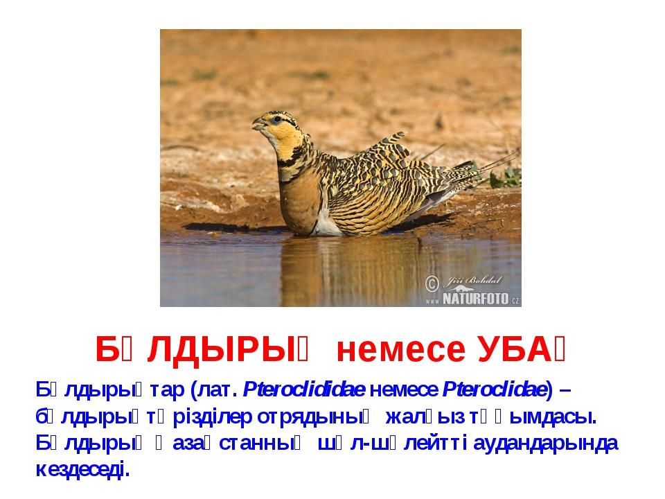 БҰЛДЫРЫҚ немесе УБАҚ Бұлдырықтар (лат. Pteroclididae немесе Pteroclidae) – бұ...