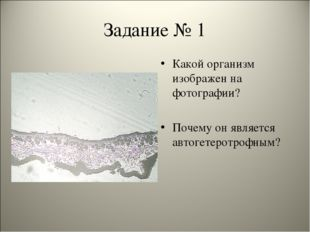 Задание № 1 Какой организм изображен на фотографии? Почему он является автоге