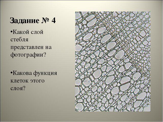 Задание № 4 Какой слой стебля представлен на фотографии? Какова функция клето...