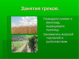 Занятия греков. Разводили оливки и виноград, выращивали пшеницу. Занимались м