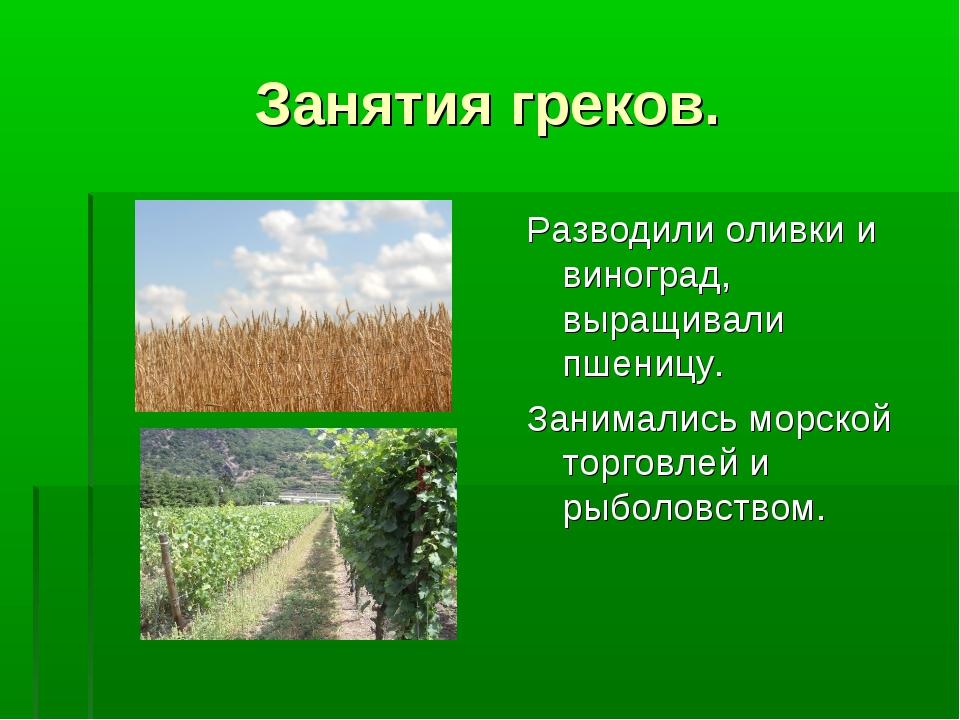 Занятия греков. Разводили оливки и виноград, выращивали пшеницу. Занимались м...