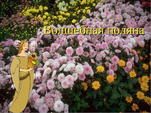 Волшебная поляна