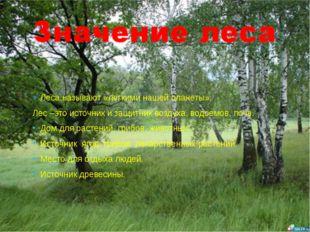 Леса называют «легкими нашей планеты». Лес –это источник и защитник воздуха,