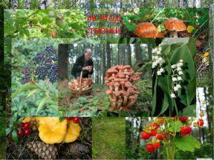Источник ягод, грибов, лекарственных трав.