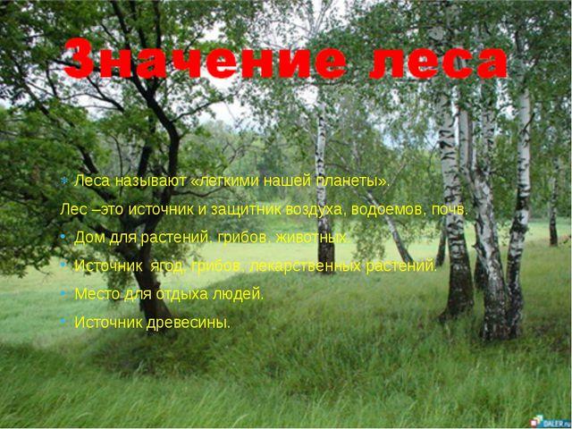 Леса называют «легкими нашей планеты». Лес –это источник и защитник воздуха,...