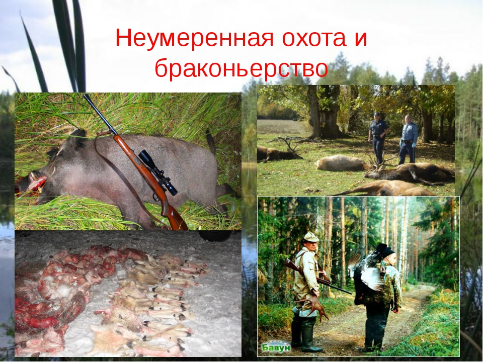 Неумеренная охота и браконьерство