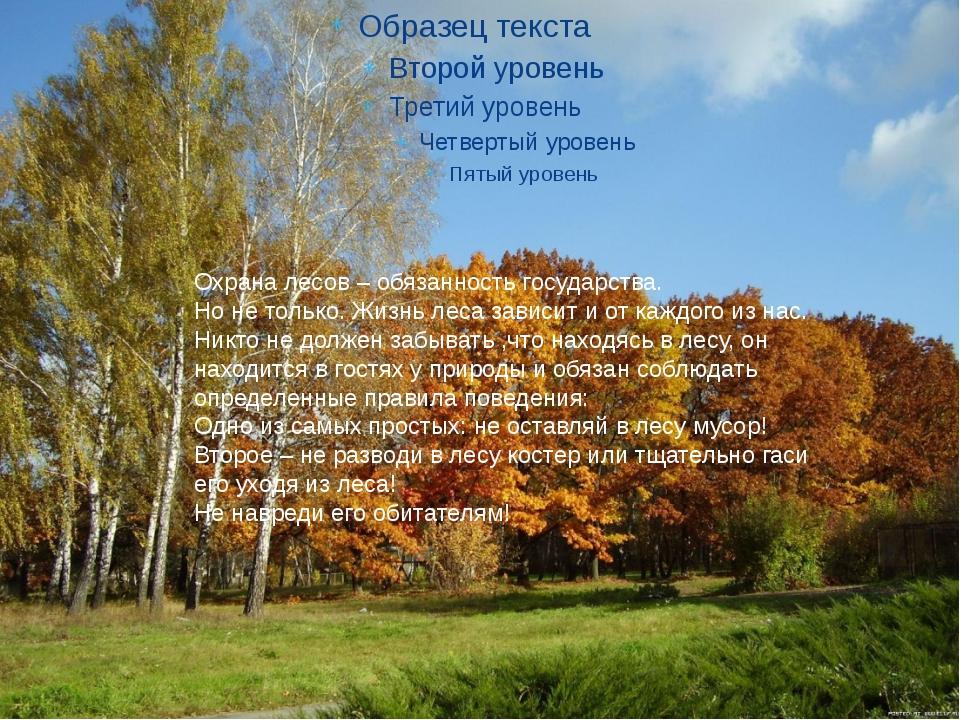 Охрана лесов – обязанность государства. Но не только. Жизнь леса зависит и о...