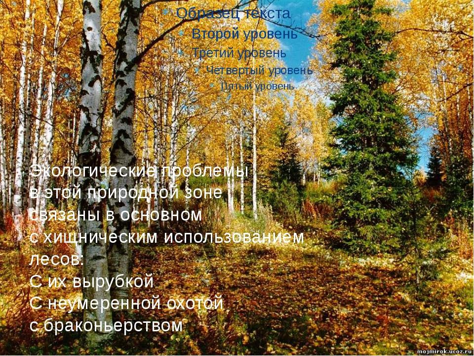 Экологические проблемы в этой природной зоне связаны в основном с хищнически...