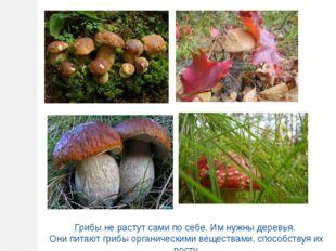 Грибы не растут сами по себе. Им нужны деревья. Они питают грибы органическим