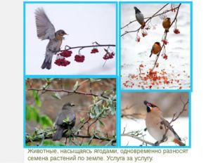 Животные, насыщаясь ягодами, одновременно разносят семена растений по земле.