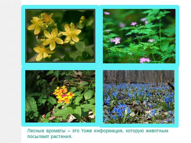 Лесные ароматы – это тоже информация, которую животным посылают растения.