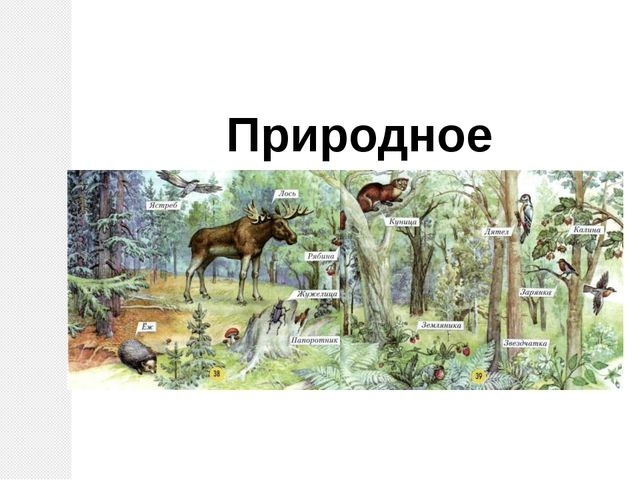 Природное сообщество – лес.