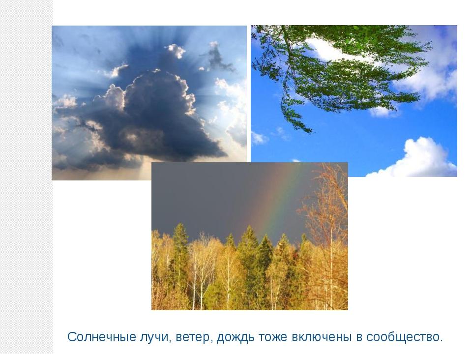 Солнечные лучи, ветер, дождь тоже включены в сообщество.
