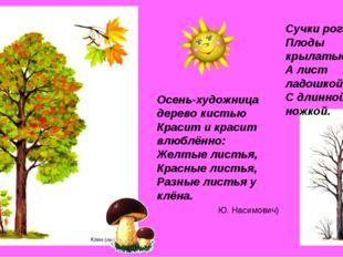 Сучки рогатые, Плоды крылатые, А лист ладошкой, С длинной ножкой. Осень-худож