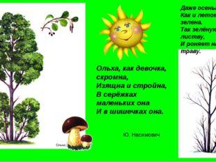 Даже осенью она, Как и летом зелена. Так зелёную листву, И роняет на траву. Е