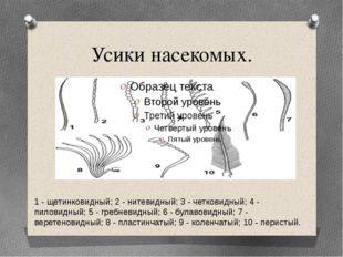 Усики насекомых. 1 - щетинковидный; 2 - нитевидный; 3 - четковидный; 4 - пило