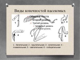 Виды конечностей насекомых 1 - бегательная; 2 - прыгательная; 3 - копательная
