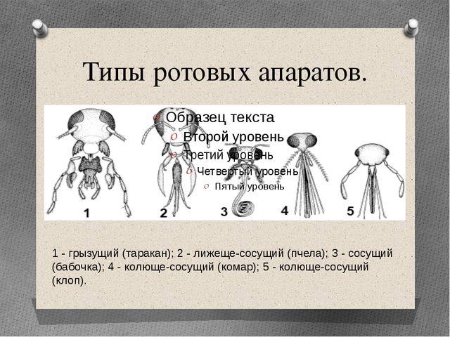 Типы ротовых апаратов. 1 - грызущий (таракан); 2 - лижеще-сосущий (пчела); 3...