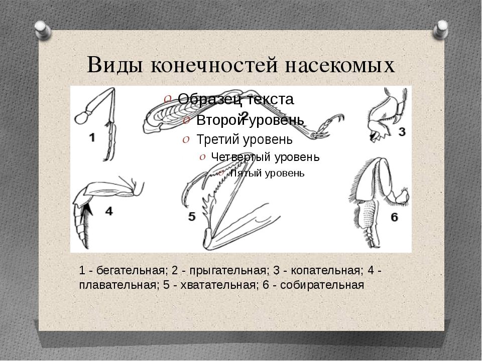 Виды конечностей насекомых 1 - бегательная; 2 - прыгательная; 3 - копательная...