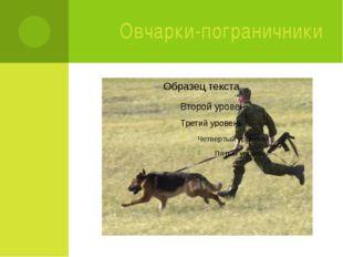 Овчарки-пограничники