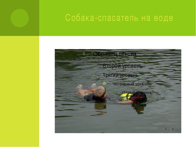 Собака-спасатель на воде