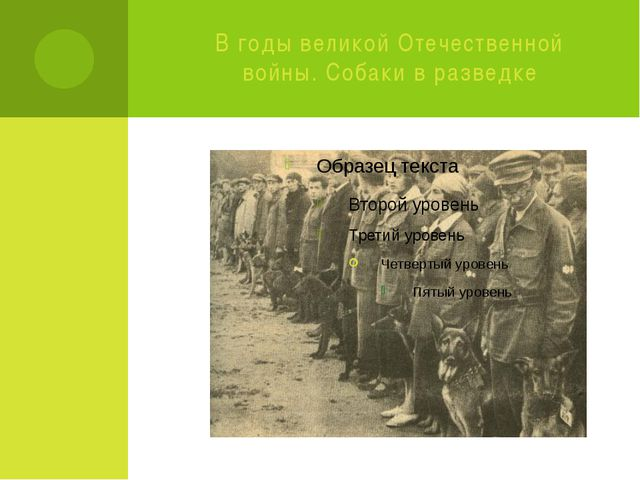 В годы великой Отечественной войны. Собаки в разведке