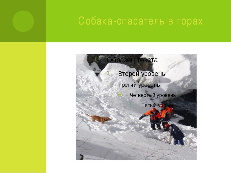 Собака-спасатель в горах