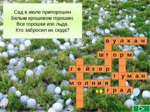в н у л к а р ш т о м Сад в июле припорошен Белым крошевом горошин. Все горо