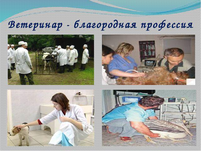 Ветеринар - благородная профессия